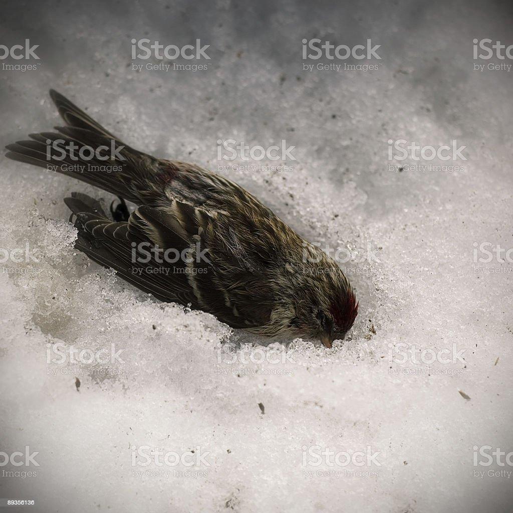 dead bird royaltyfri bildbanksbilder