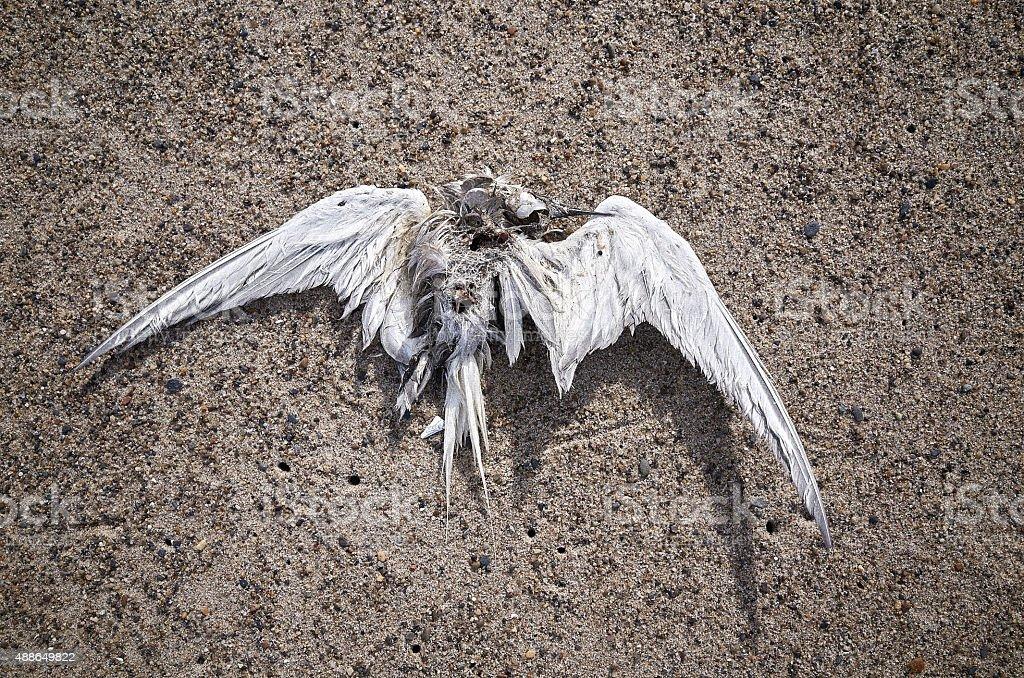 Dead bird tern stock photo