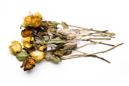 Dead Bouquet of Roses