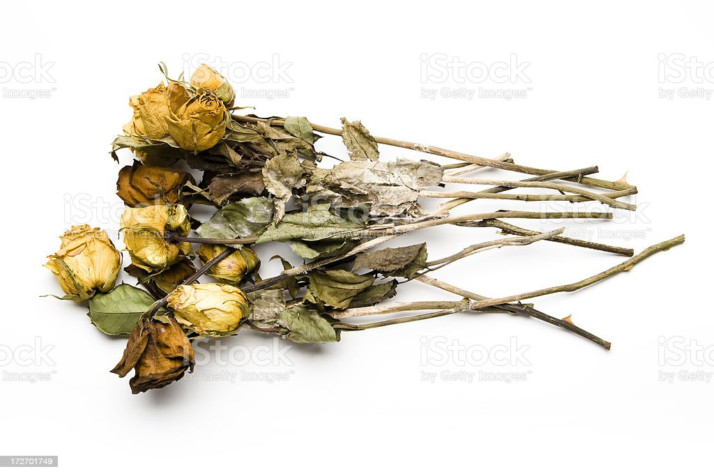 Dead Bouquet of Roses stock photo
