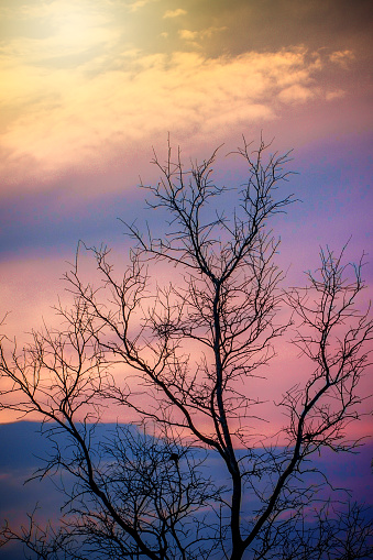 Dead Branch tree with colorful sky and twilight sunset time.