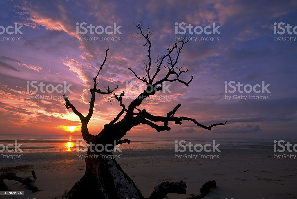 Dead branches against dramatic sunrise. royalty-free stock photo