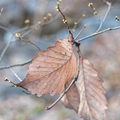 Een Dode Bruin Blad Te Vallen In De Herfst Stockfoto en meer beelden van Achtergrond - Thema