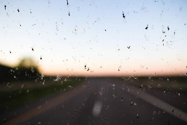 Toten Fehler auf der Windschutzscheibe – Foto