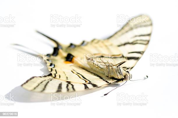 Dead butterfly on a white background picture id96329616?b=1&k=6&m=96329616&s=612x612&h=zt9apotgiywpdg 7cgjilq8lzp76ntulovdhhpphcoq=