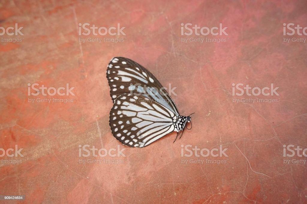 borboleta morta no chão - foto de acervo