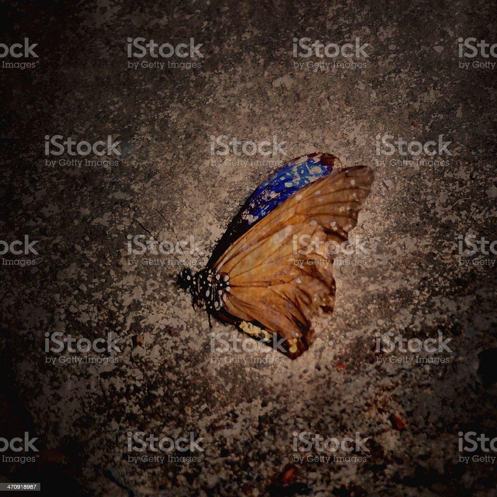 Dead Borboleta - - foto de acervo