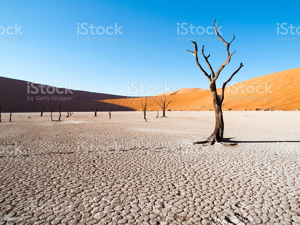 Dead camel thorn trees in Deadvlei dry pan with cracked - foto de stock
