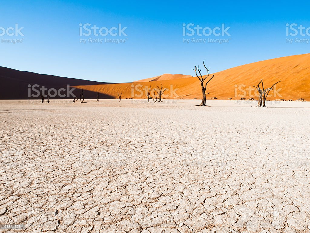 Dead camel thorn trees in Deadvlei dry pan with cracked stock photo