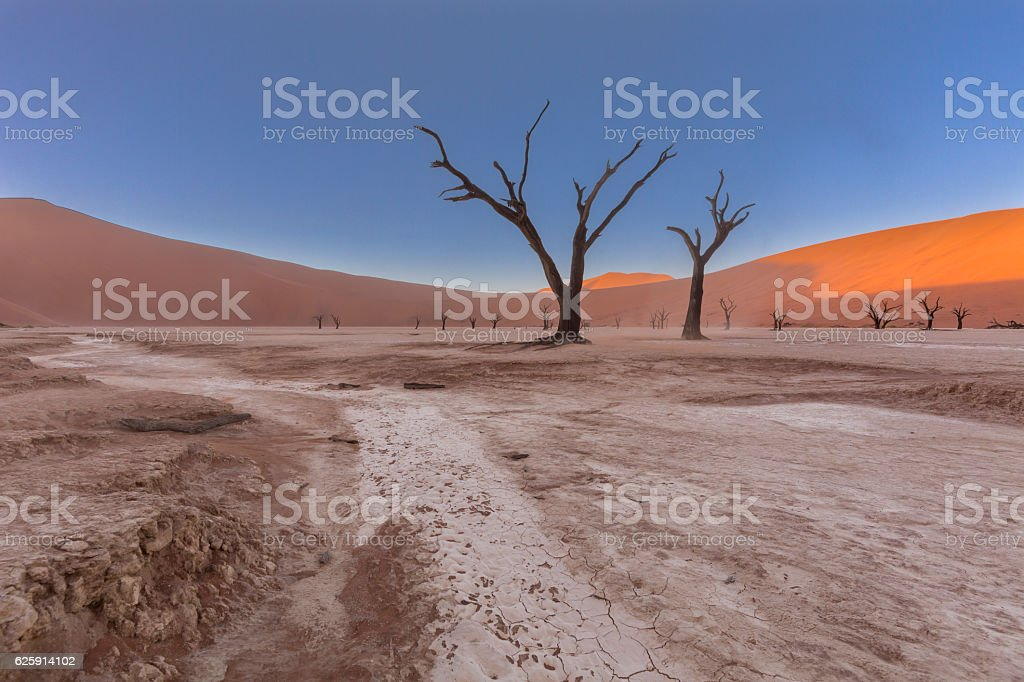 Dead Camel thorn trees in Dooievlei stock photo