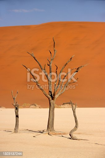istock Dead camelthorn tree standing on salt-clay pan of deadvlei inside the Namib-Naukluft national park. Single tree with red sand dune in the background. 1323137244