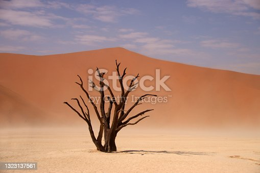 istock Dead camelthorn tree standing on salt-clay pan of deadvlei inside the Namib-Naukluft national park. Single tree with red sand dune in the background. 1323137561