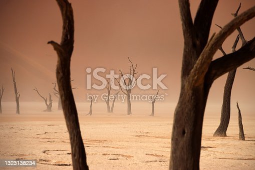 istock Dead camelthorn tree standing on salt-clay pan of deadvlei inside the Namib-Naukluft national park. Single tree with red sand dune in the background. 1323138234