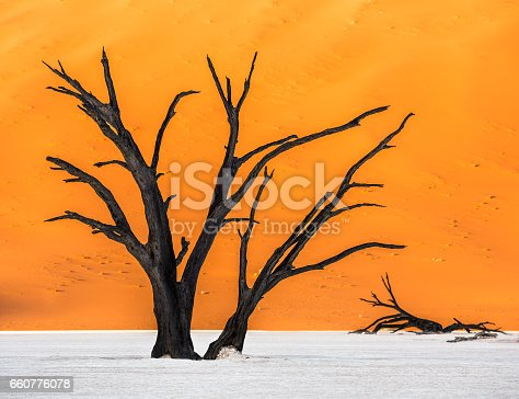1083309578istockphoto Dead Camelthorn Trees and red dunes in Deadvlei 660776078