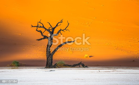 1083309578istockphoto Dead Camelthorn Trees and red dunes in Deadvlei, Sossusvlei, Namib-Naukluft National Park, Namibia 691137184
