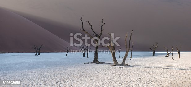 1083309578istockphoto Dead Camelthorn Trees and red dunes in Deadvlei, Sossusvlei, Namib-Naukluft National Park, Namibia 829603956
