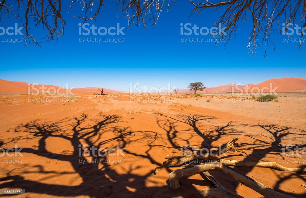 Dead Camelthorn Trees and red dunes in Sossusvlei, Namib-Naukluft National Park, Namibia royalty-free stock photo