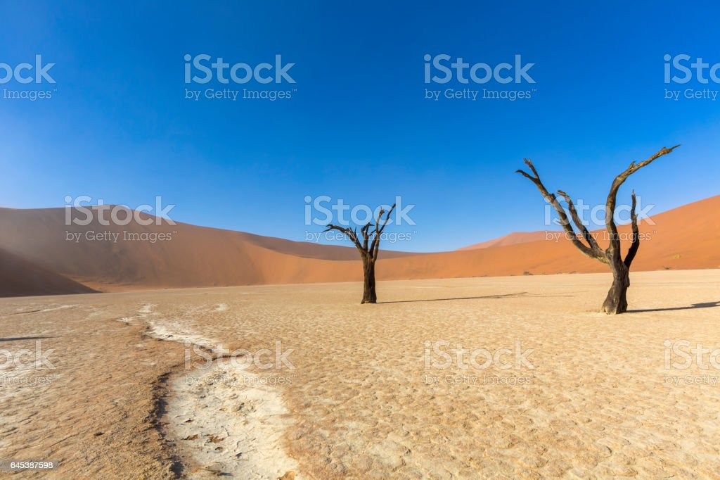 Dead Camelthorn trees in Dooievlei stock photo