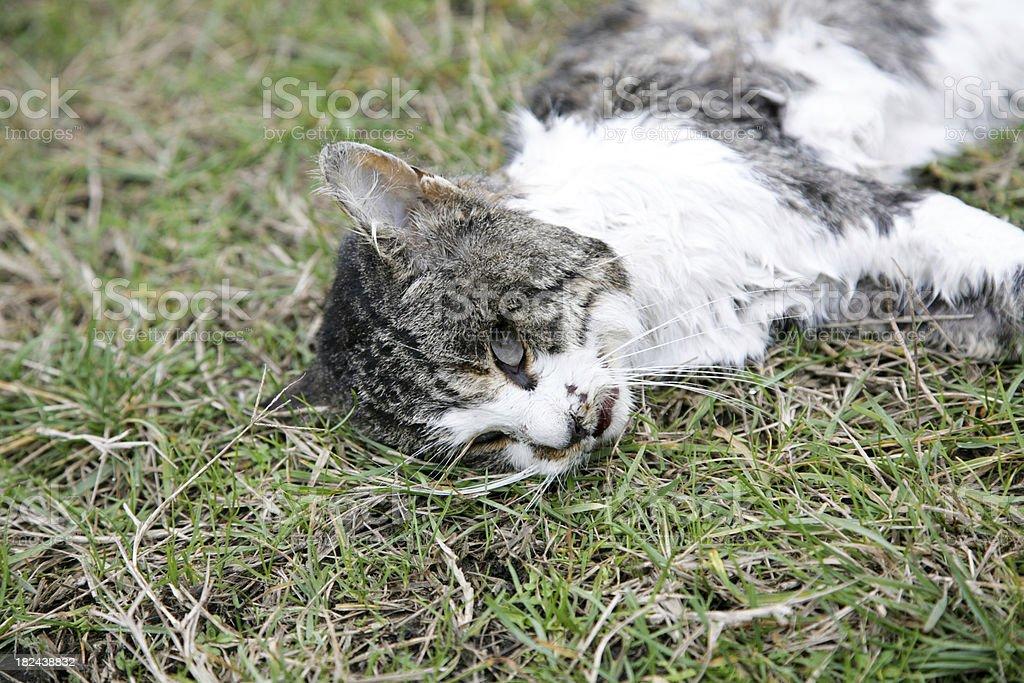 dead cat stock photo