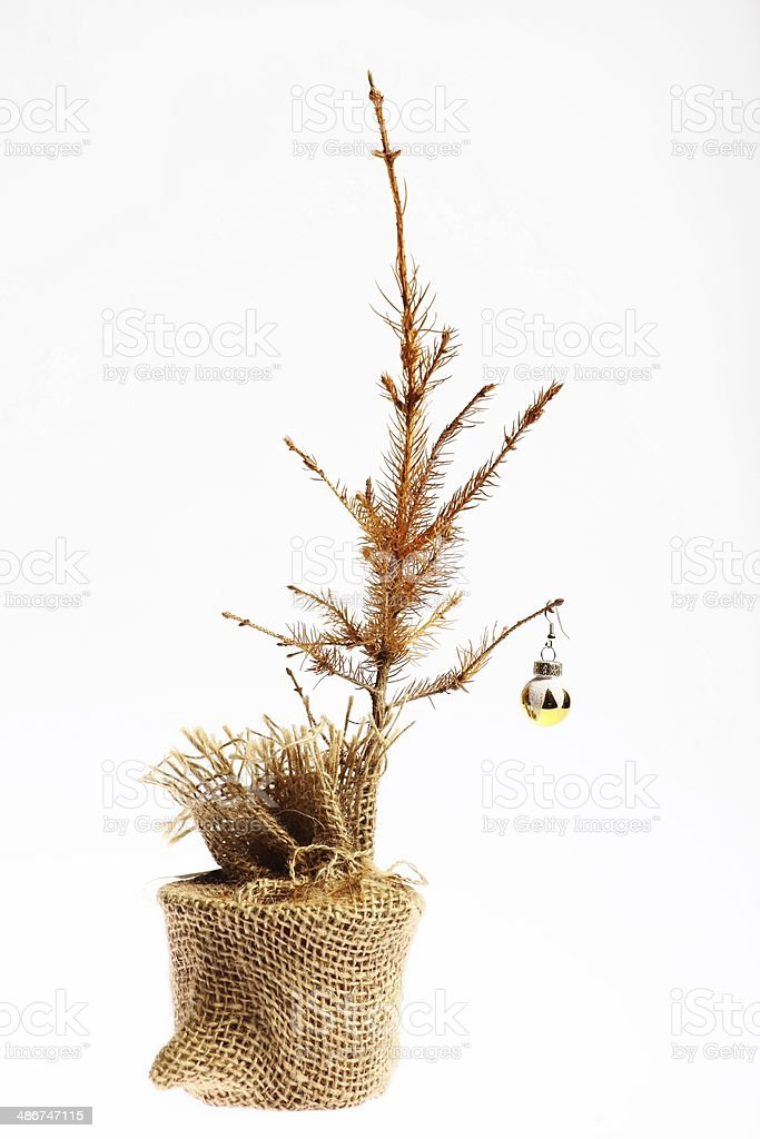 dead christmas tree royalty free stock photo
