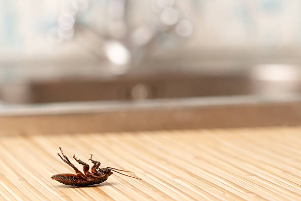 Dead cockroach in apartment house in the kitchen. Dead cockroaches in an apartment house on the background of the water faucet. Inside high-rise buildings. Fight with cockroaches in the apartment. Extermination. pest stock pictures, royalty-free photos & images