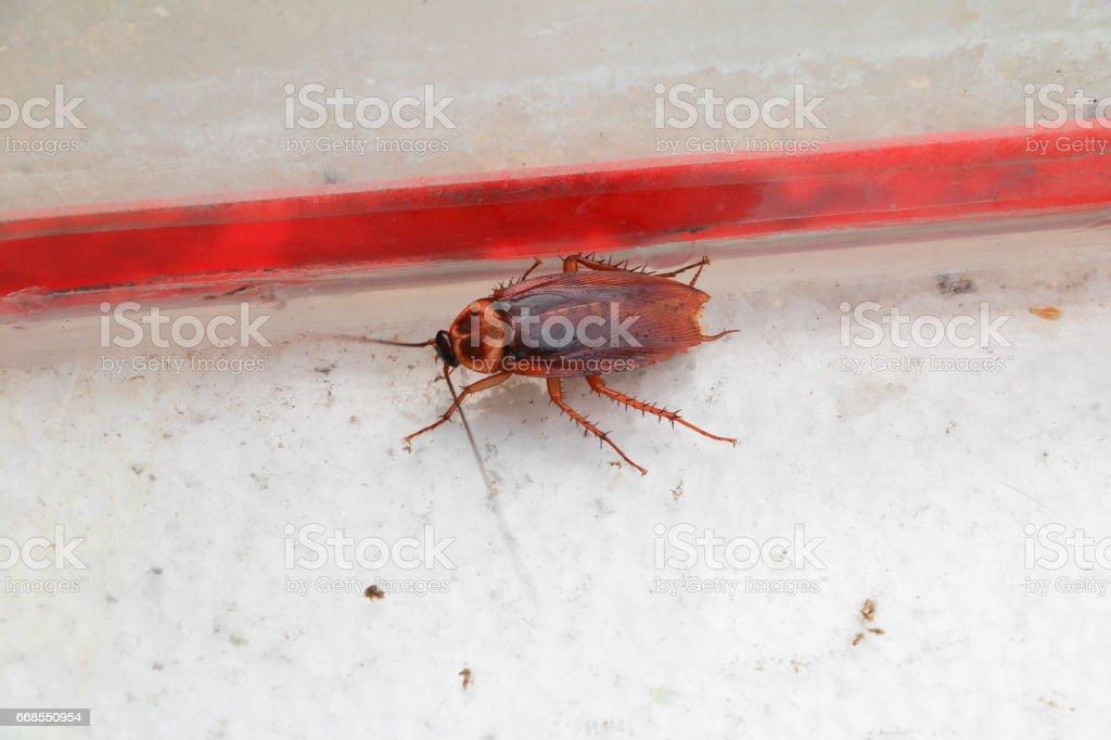 dead cockroach lean Top view - foto stock