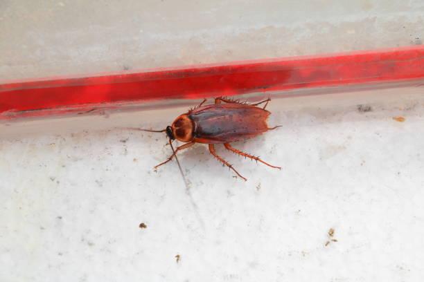死んだゴキブリ無駄のない平面図 - グローサーシュテルン広場 ストックフォトと画像