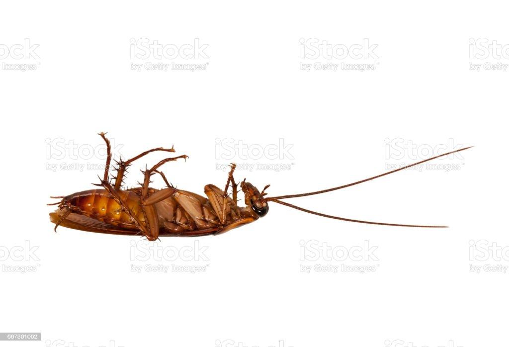 dead cockroach - foto stock