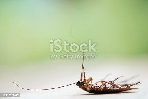 istock Dead cockroach 822254004