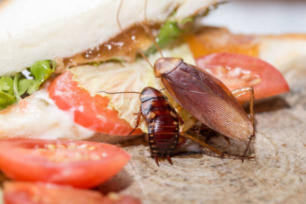 dead kackerlacka, problemet i huset på grund av kackerlackor som bor i kök. - coffe with death bildbanksfoton och bilder