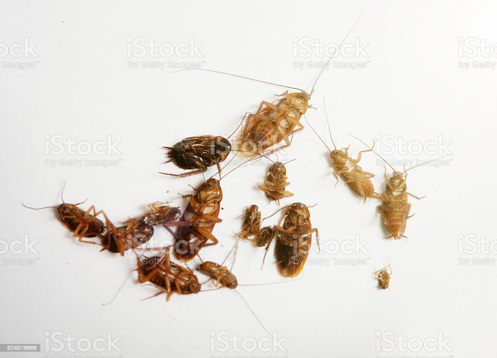 Toten Kakerlaken In Allen Formen Und Grossen Stock Fotografie Und