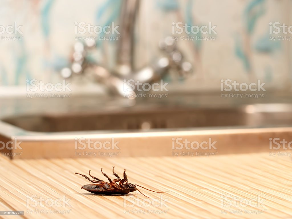 Dead cockroaches in an apartment house stock photo