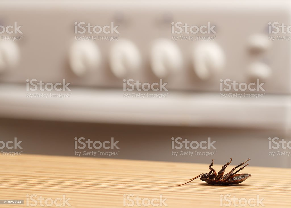 Dead cockroaches in an apartment kitchen. Inside high-rise buildings. stock photo