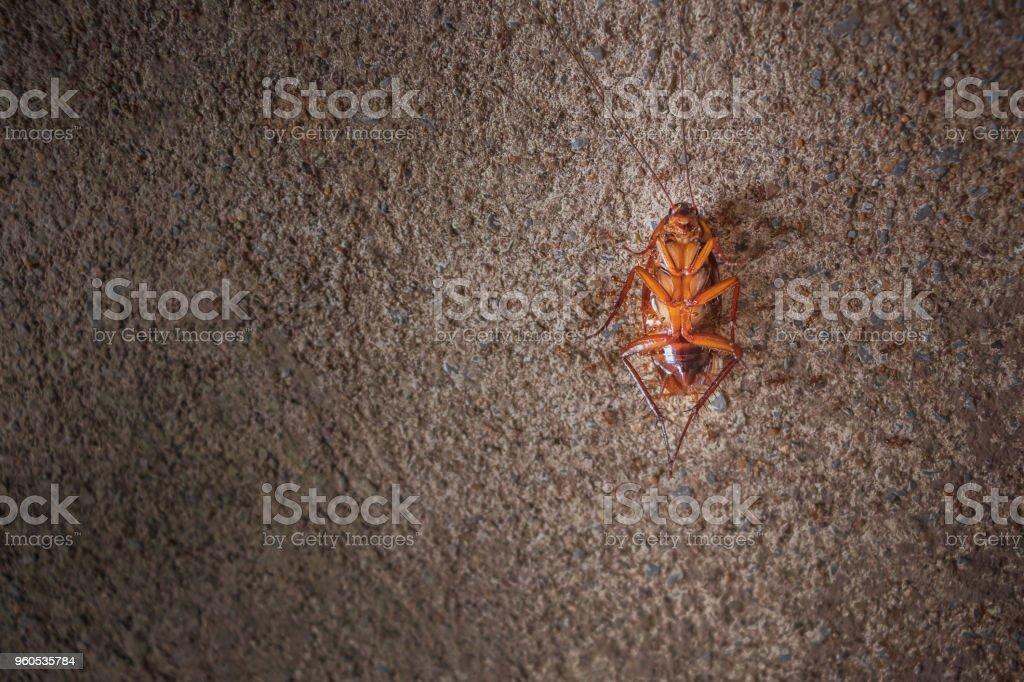 Dead cockroaches on cement floor stock photo