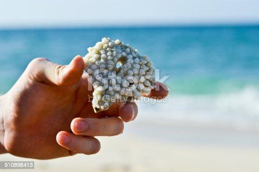 istock Dead Coral 510898413