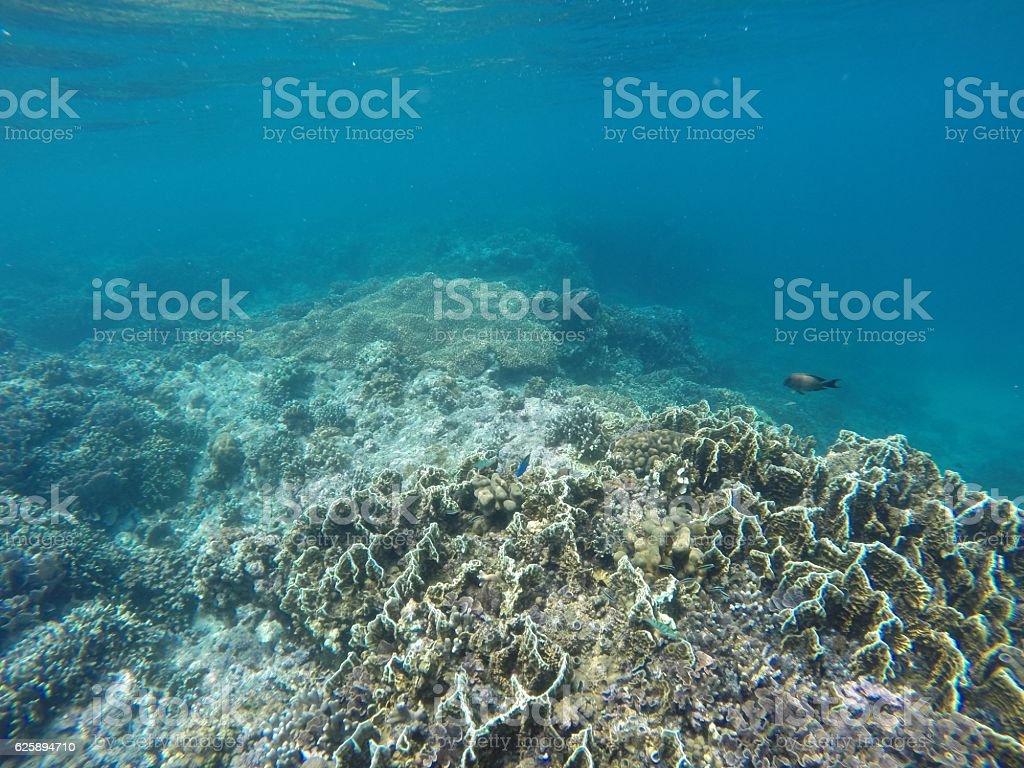 Dead corals underwater stock photo