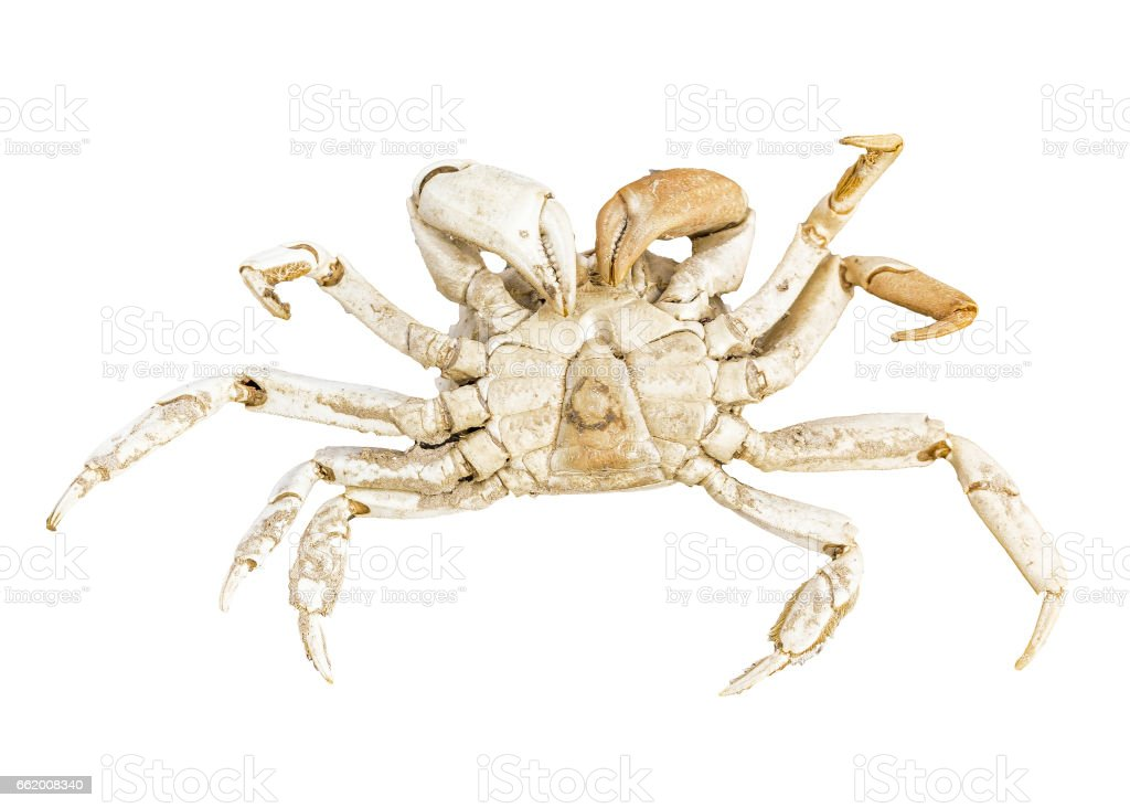 Dead Crab at Mud Cracked Ground royalty-free stock photo