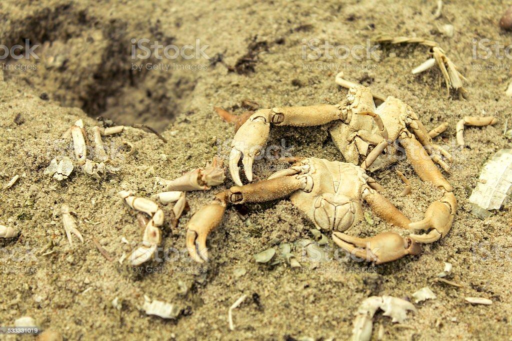 Dead crabs stock photo