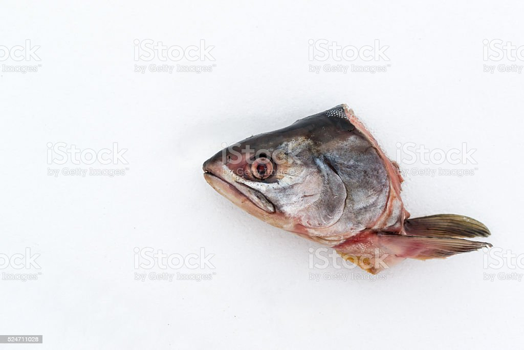 Dead Cutt Off Fish Head on Snow Abstract stock photo
