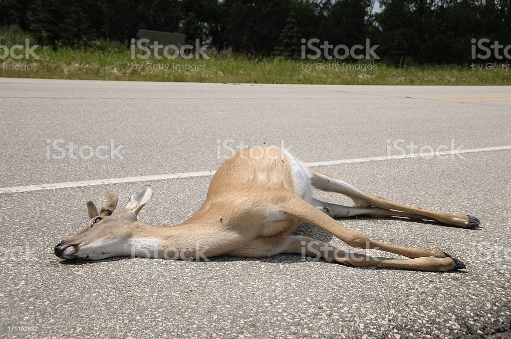 Dead deer by side of road stock photo