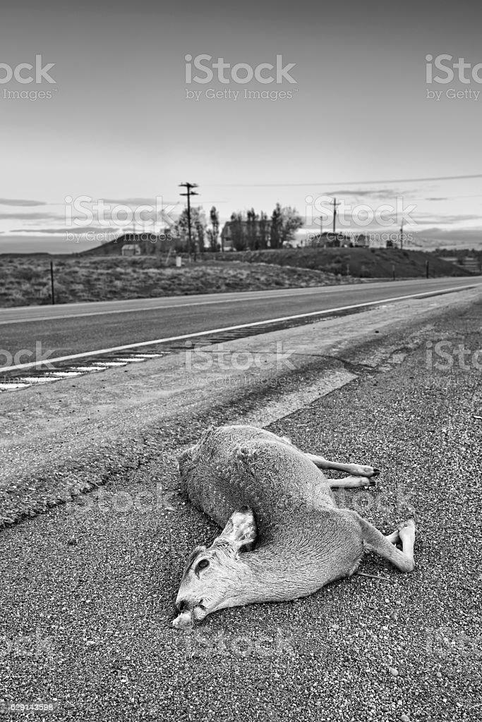 Dead deer hit by a car lying by the road, - foto de acervo