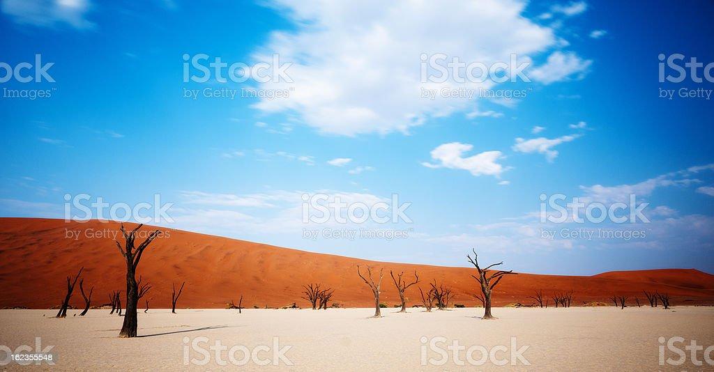Dead desert trees stock photo