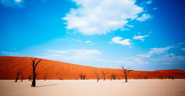 bäume tot wüste - namib wüste stock-fotos und bilder