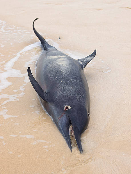 tote delfin - die toteninsel stock-fotos und bilder
