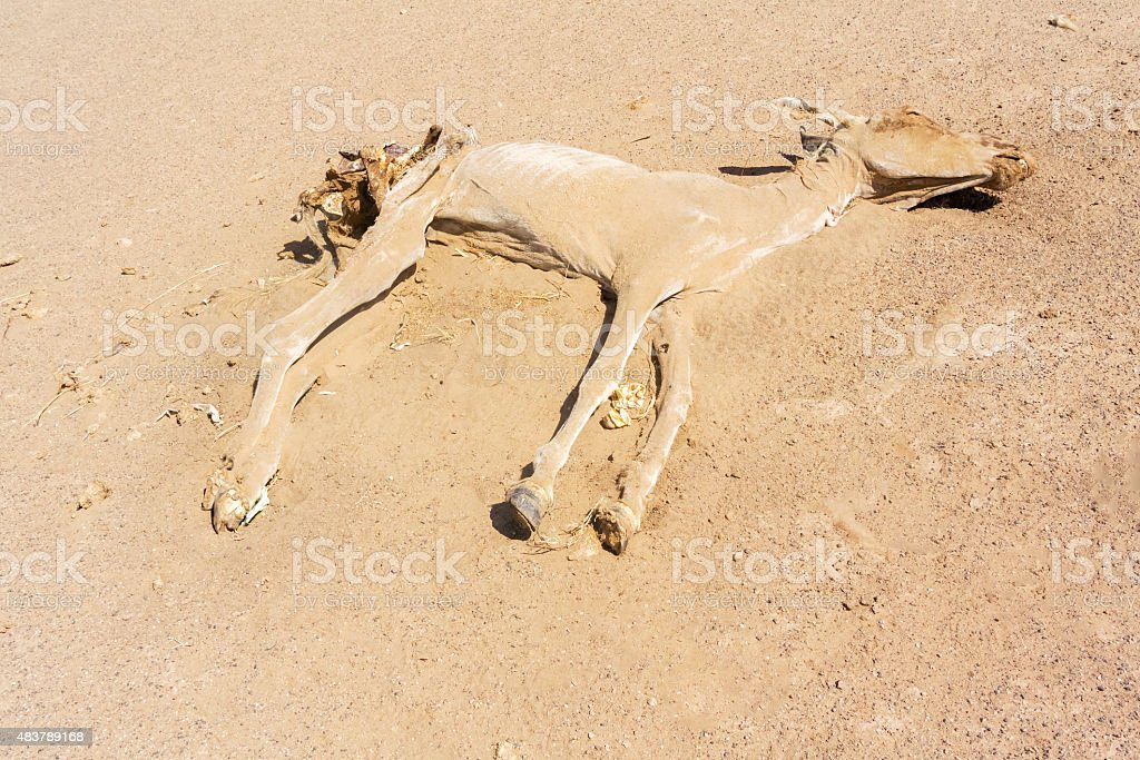 Dead donkey in the desert stock photo