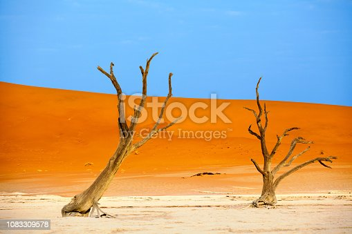 istock Dead dry camel torn trees on orange sand dunes and bright blue sky background, Naukluft National Park Namib Desert, Namibia 1083309578