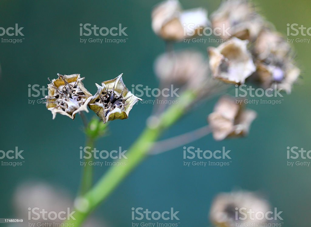 dead dry flowers royalty-free stock photo