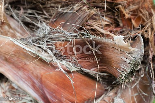 istock Dead dry leaves , backgrounds and textures leafs, closeup shot 1024342444