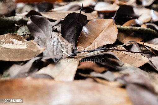 istock Dead dry leaves , backgrounds and textures leafs, closeup shot 1024342550