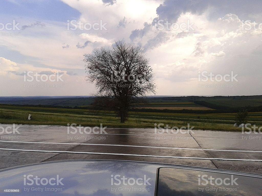Dead dry tree between green fields at roadside royalty-free stock photo
